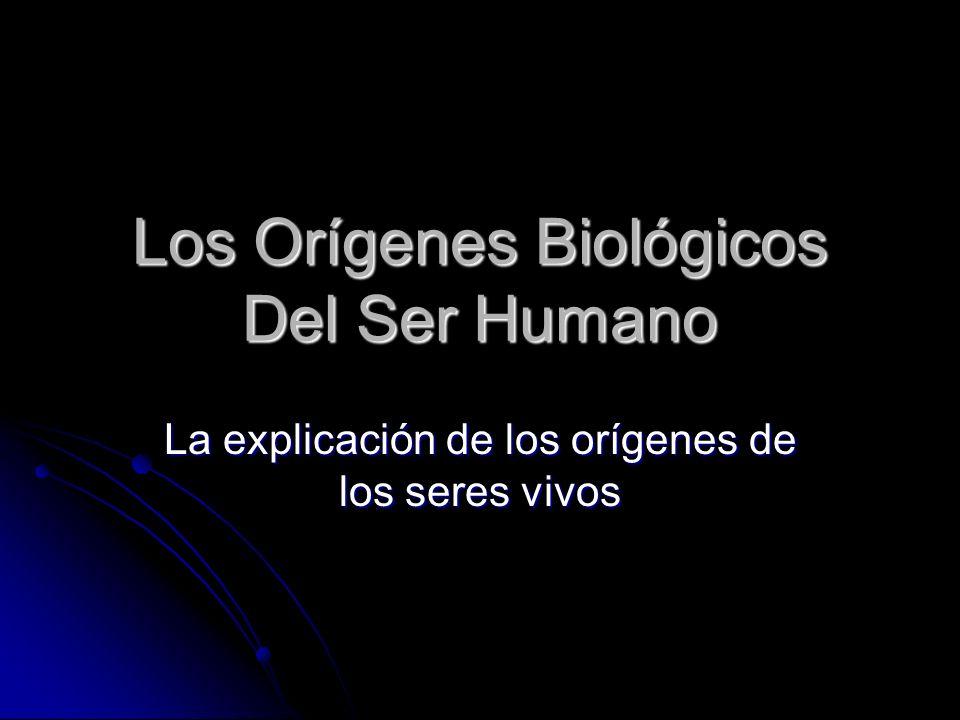 Los Orígenes Biológicos Del Ser Humano