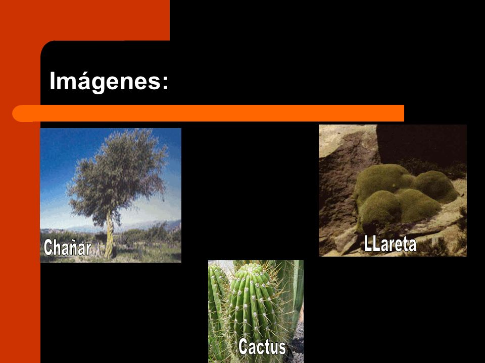 Imágenes: LLareta Chañar Cactus