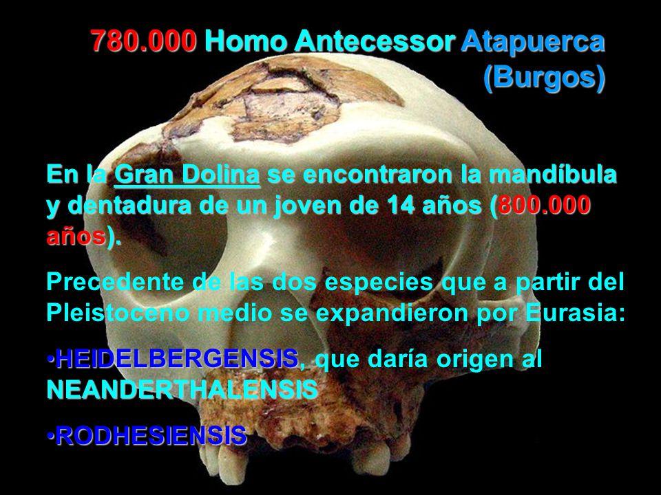 780.000 Homo Antecessor Atapuerca (Burgos)
