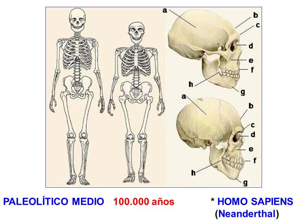PALEOLÍTICO MEDIO 100.000 años * HOMO SAPIENS
