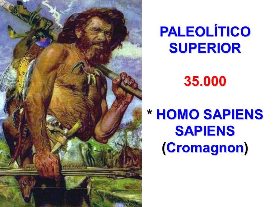 * HOMO SAPIENS SAPIENS (Cromagnon)