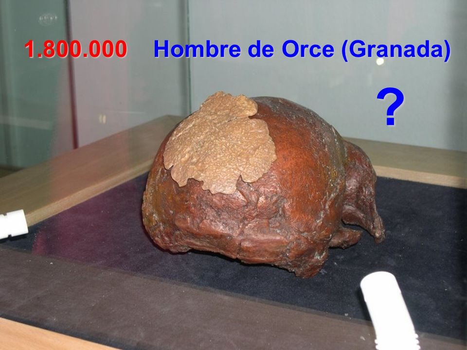 1.800.000 Hombre de Orce (Granada)