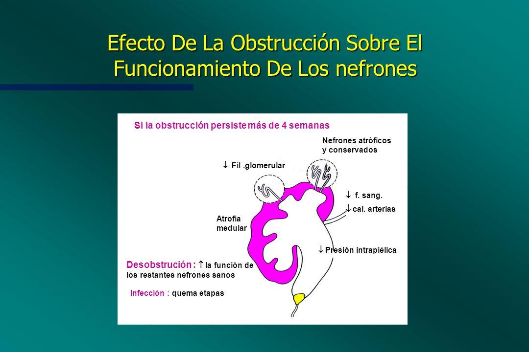 Efecto De La Obstrucción Sobre El Funcionamiento De Los nefrones