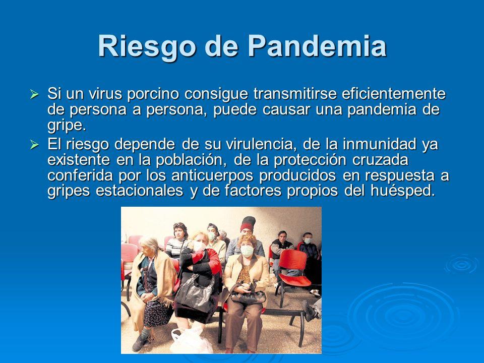 Riesgo de Pandemia Si un virus porcino consigue transmitirse eficientemente de persona a persona, puede causar una pandemia de gripe.