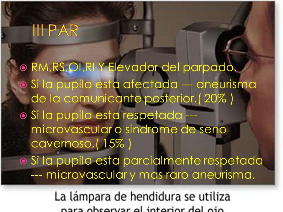 III PAR RM,RS,OI,RI Y Elevador del parpado.