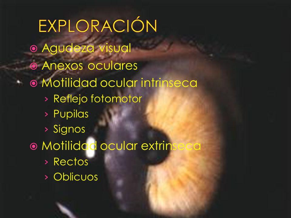 EXPLORACIÓN Agudeza visual Anexos oculares Motilidad ocular intrinseca
