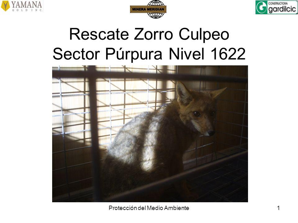 Rescate Zorro Culpeo Sector Púrpura Nivel 1622