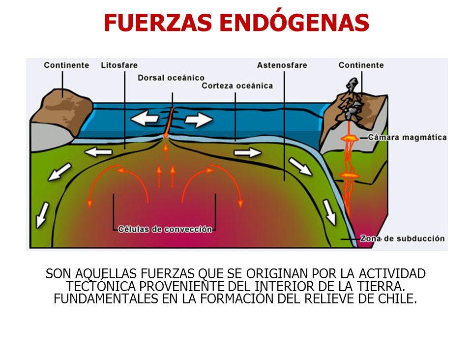 FUERZAS ENDÓGENAS