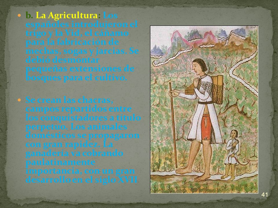 b. La Agricultura: Los españoles introdujeron el trigo y la Vid, el cáñamo para la fabricación de mechas, sogas y jarcias. Se debió desmontar pequeñas extensiones de bosques para el cultivo.