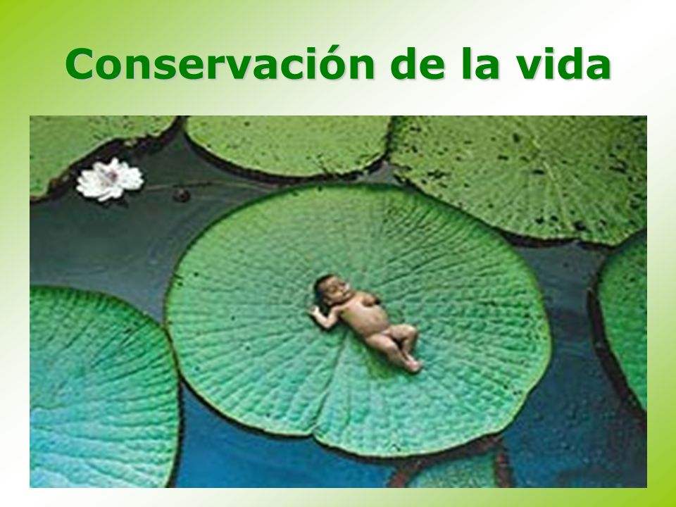 Conservación de la vida