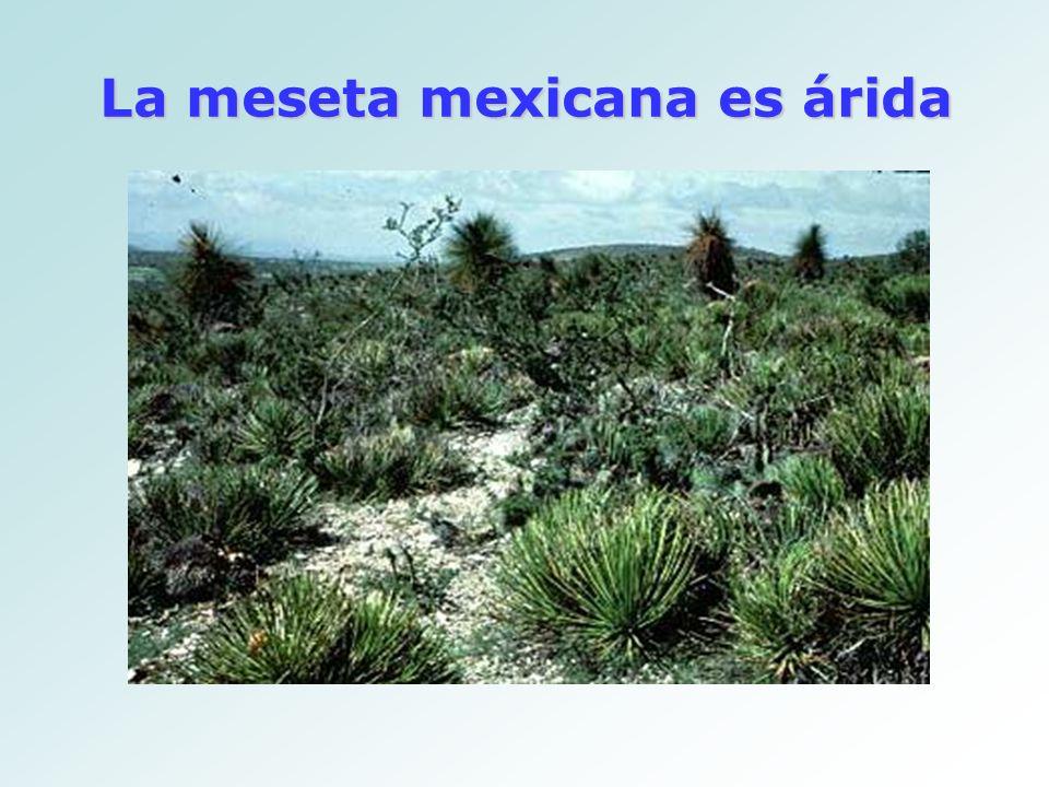 La meseta mexicana es árida