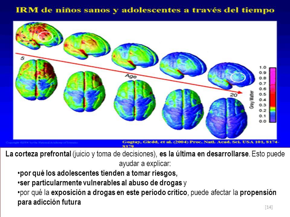 La corteza prefrontal (juicio y toma de decisiones), es la última en desarrollarse. Esto puede ayudar a explicar: