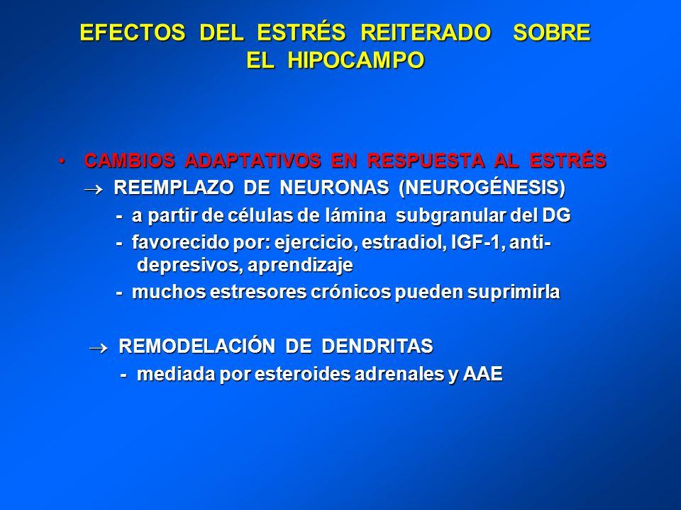 EFECTOS DEL ESTRÉS REITERADO SOBRE EL HIPOCAMPO