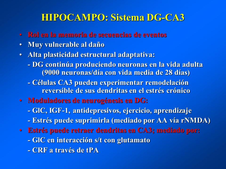 HIPOCAMPO: Sistema DG-CA3