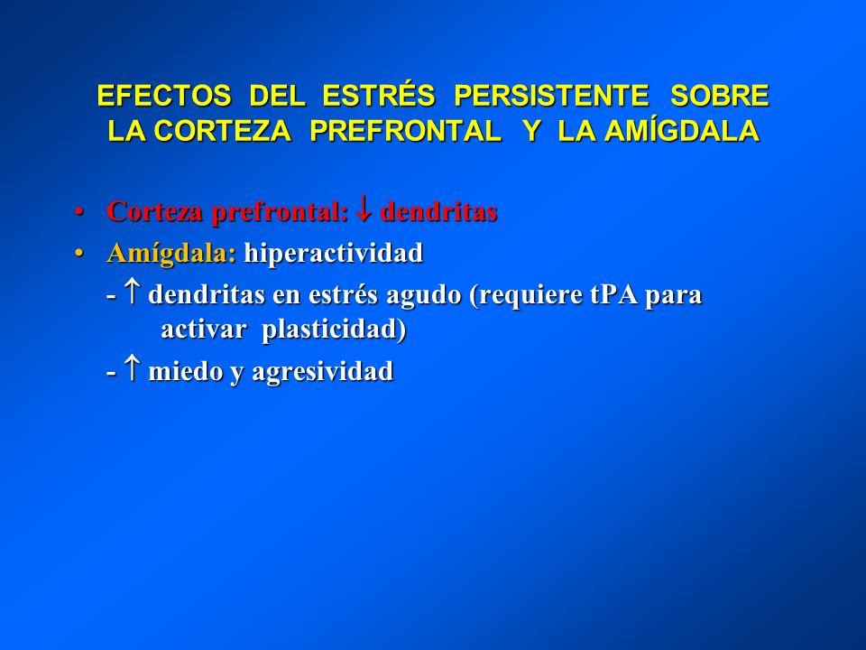 EFECTOS DEL ESTRÉS PERSISTENTE SOBRE LA CORTEZA PREFRONTAL Y LA AMÍGDALA