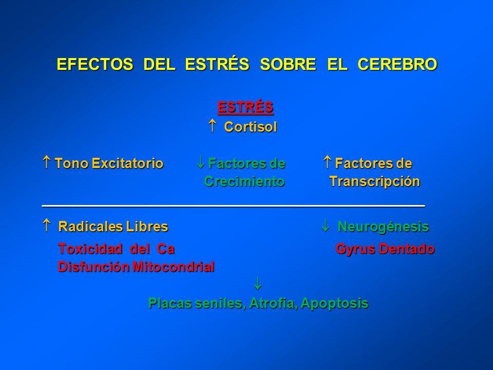 EFECTOS DEL ESTRÉS SOBRE EL CEREBRO
