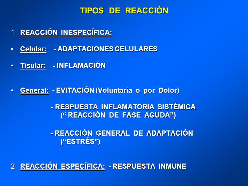TIPOS DE REACCIÓN REACCIÓN INESPECÍFICA: