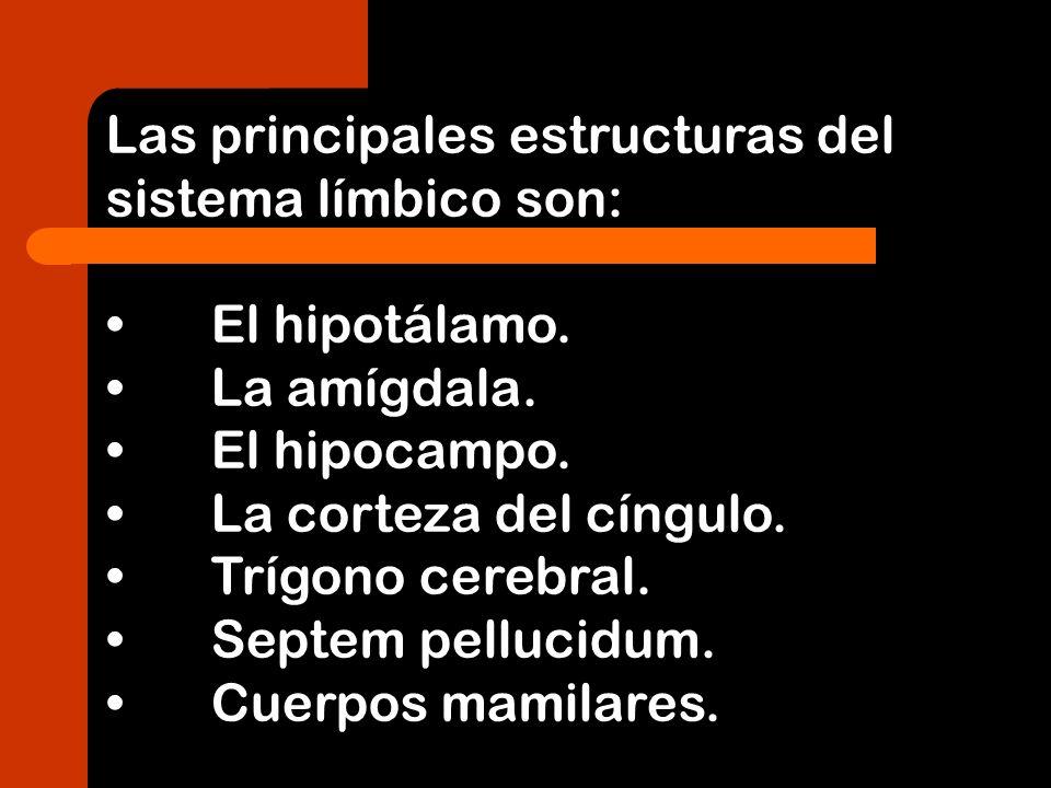 Las principales estructuras del sistema límbico son: