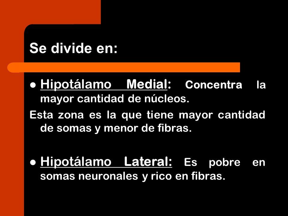 Se divide en:Hipotálamo Medial: Concentra la mayor cantidad de núcleos. Esta zona es la que tiene mayor cantidad de somas y menor de fibras.