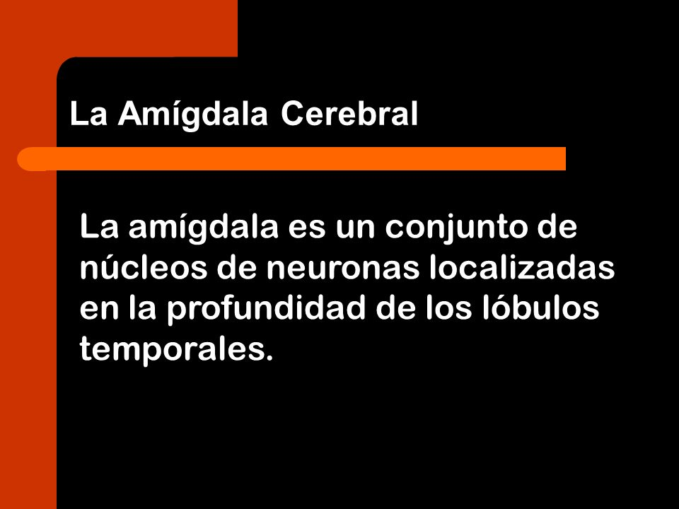La Amígdala Cerebral La amígdala es un conjunto de núcleos de neuronas localizadas en la profundidad de los lóbulos temporales.