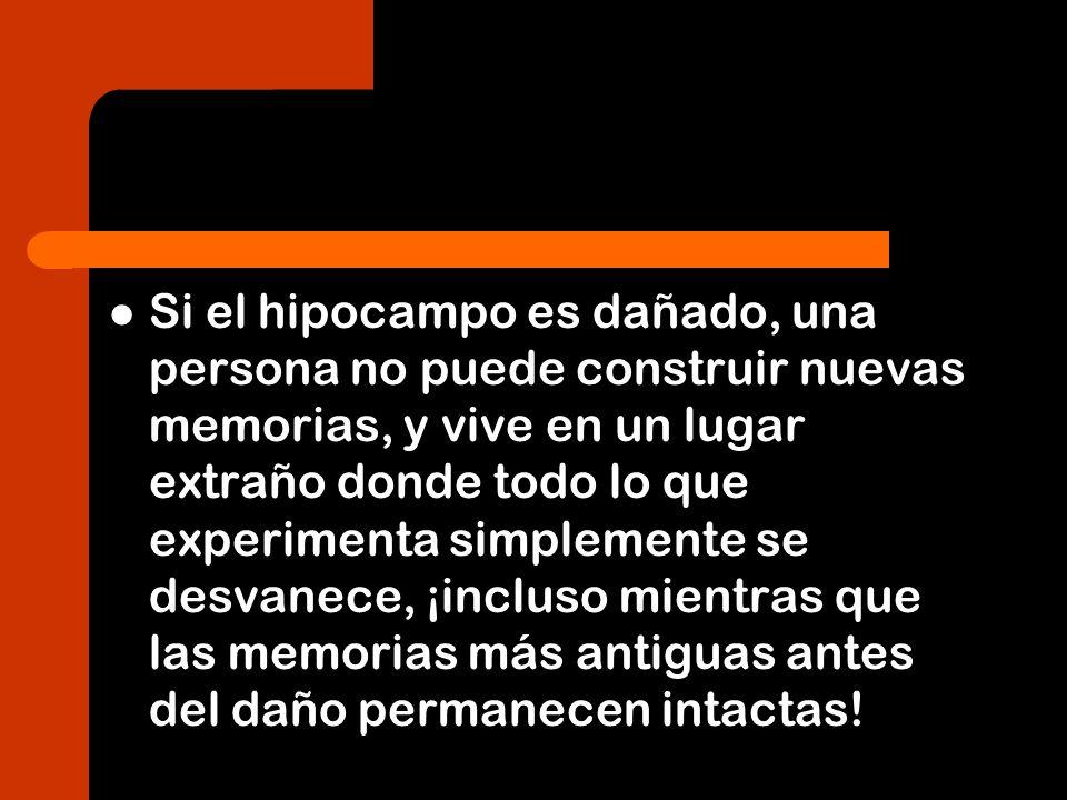 Si el hipocampo es dañado, una persona no puede construir nuevas memorias, y vive en un lugar extraño donde todo lo que experimenta simplemente se desvanece, ¡incluso mientras que las memorias más antiguas antes del daño permanecen intactas!