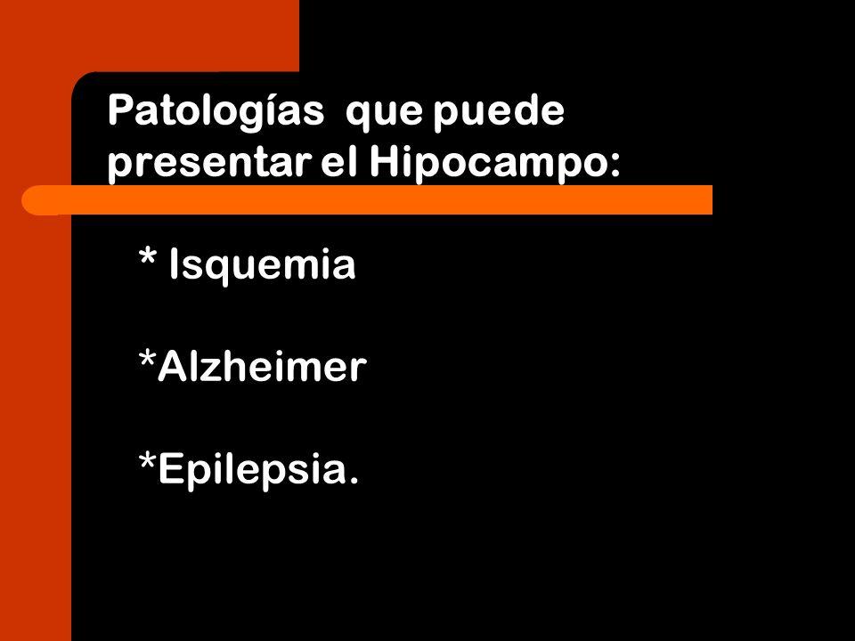 Patologías que puede presentar el Hipocampo: