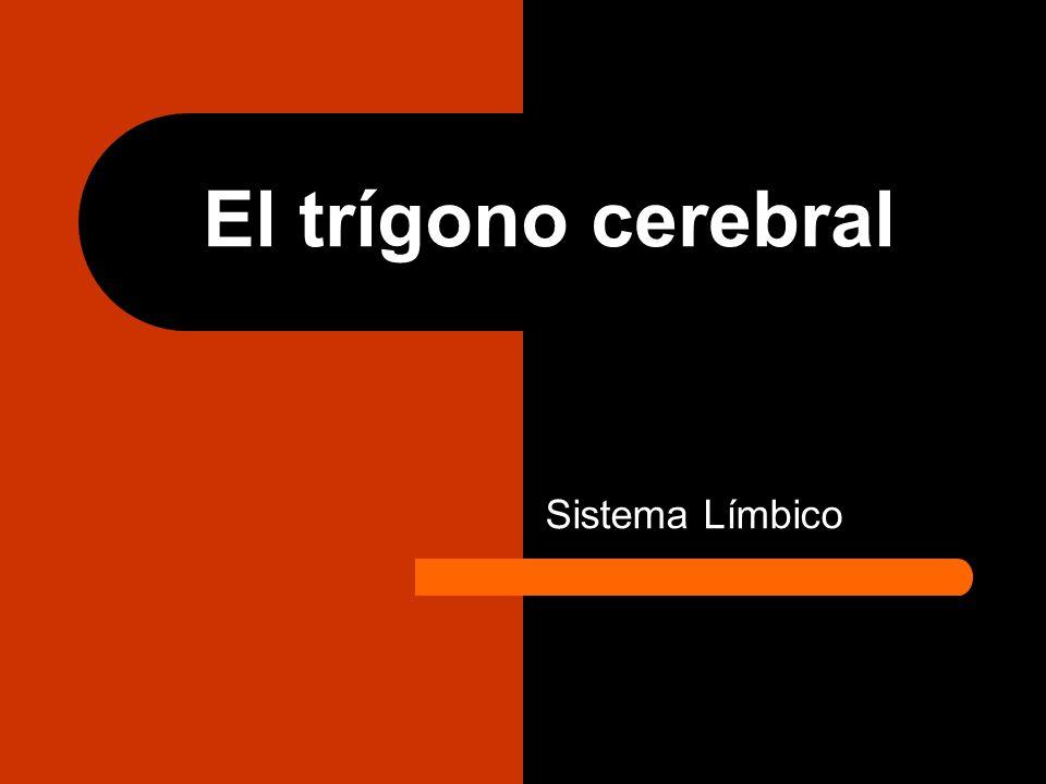 El trígono cerebral Sistema Límbico