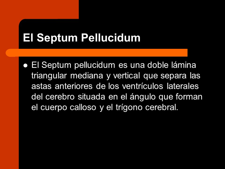 El Septum Pellucidum