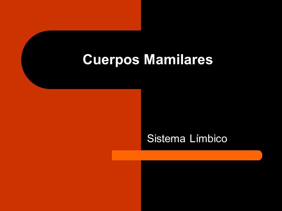 Cuerpos Mamilares Sistema Límbico