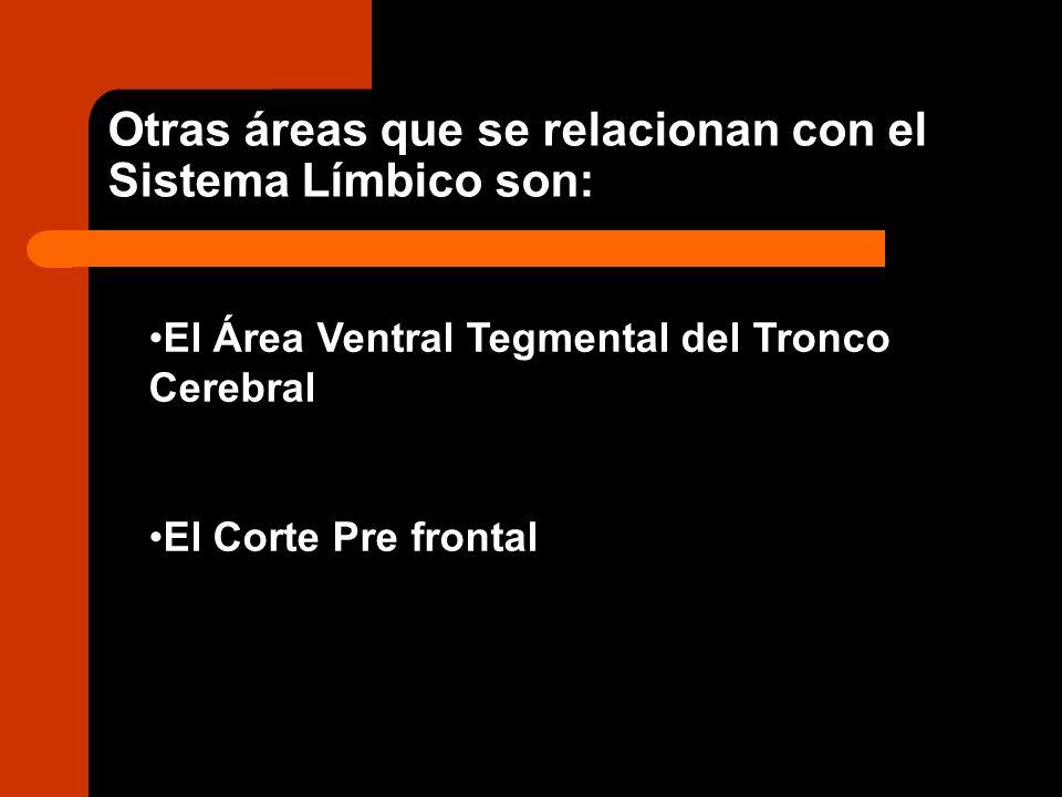 Otras áreas que se relacionan con el Sistema Límbico son: