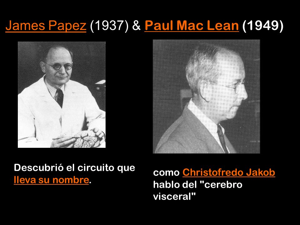 James Papez (1937) & Paul Mac Lean (1949)