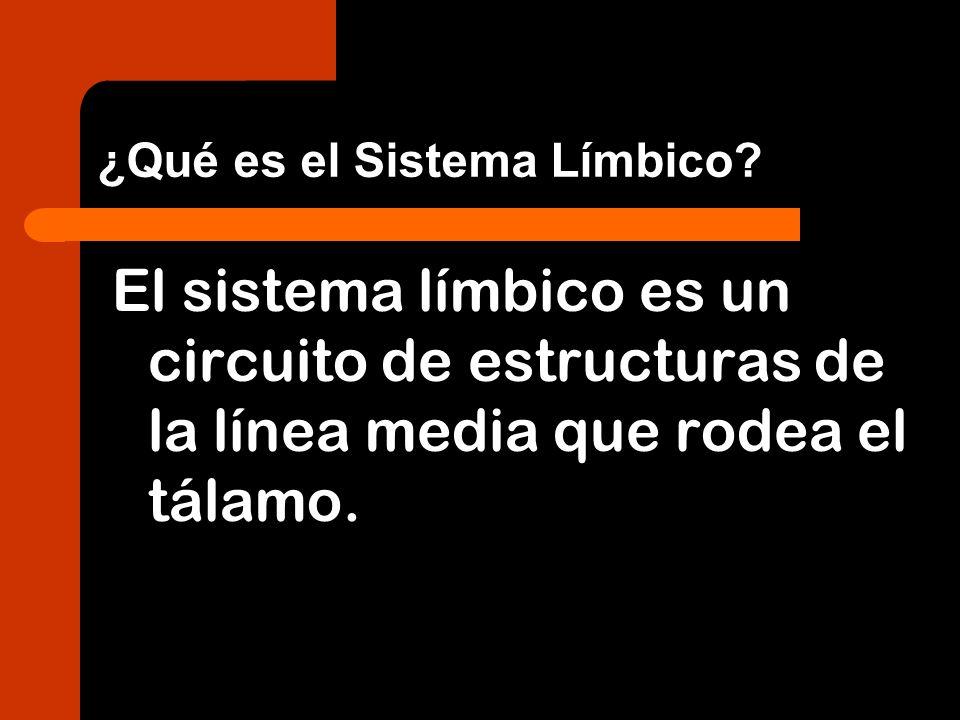 ¿Qué es el Sistema Límbico