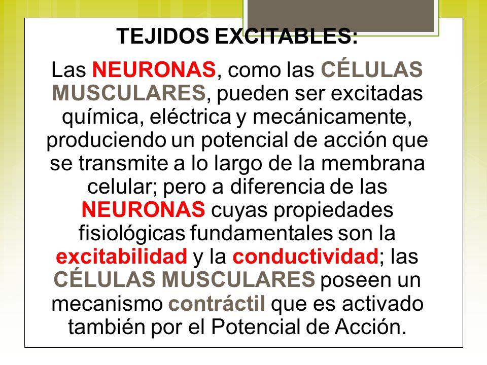 TEJIDOS EXCITABLES: