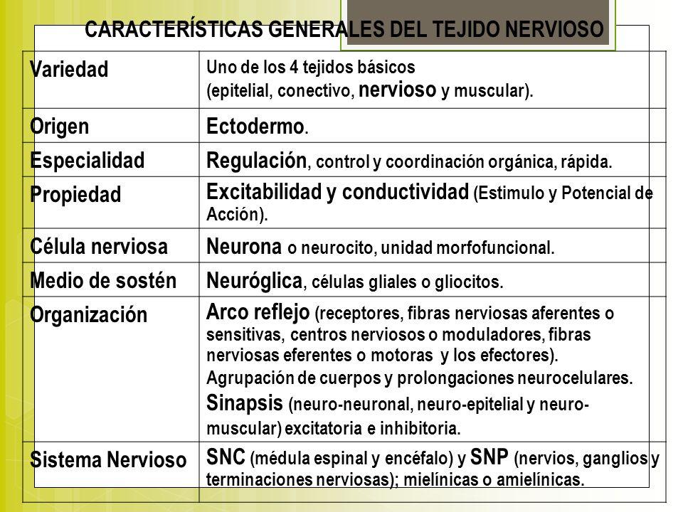 CARACTERÍSTICAS GENERALES DEL TEJIDO NERVIOSO