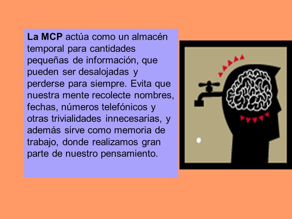 La MCP actúa como un almacén temporal para cantidades pequeñas de información, que pueden ser desalojadas y perderse para siempre.