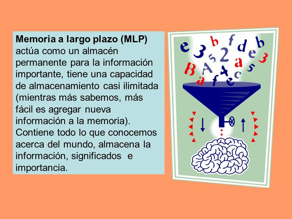 Memoria a largo plazo (MLP) actúa como un almacén permanente para la información importante, tiene una capacidad de almacenamiento casi ilimitada (mientras más sabemos, más fácil es agregar nueva información a la memoria).