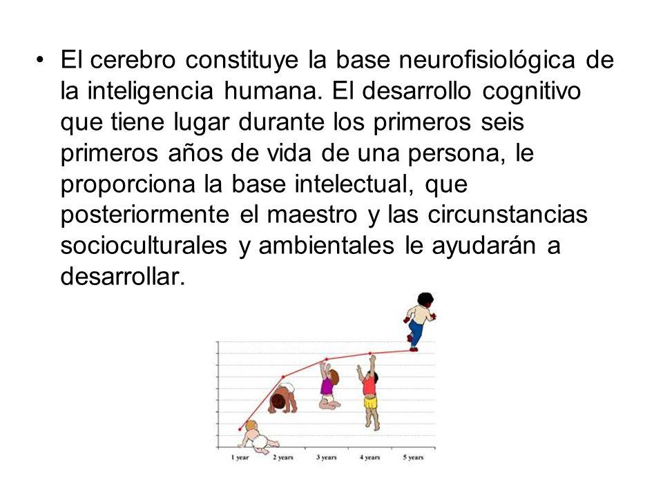El cerebro constituye la base neurofisiológica de la inteligencia humana.