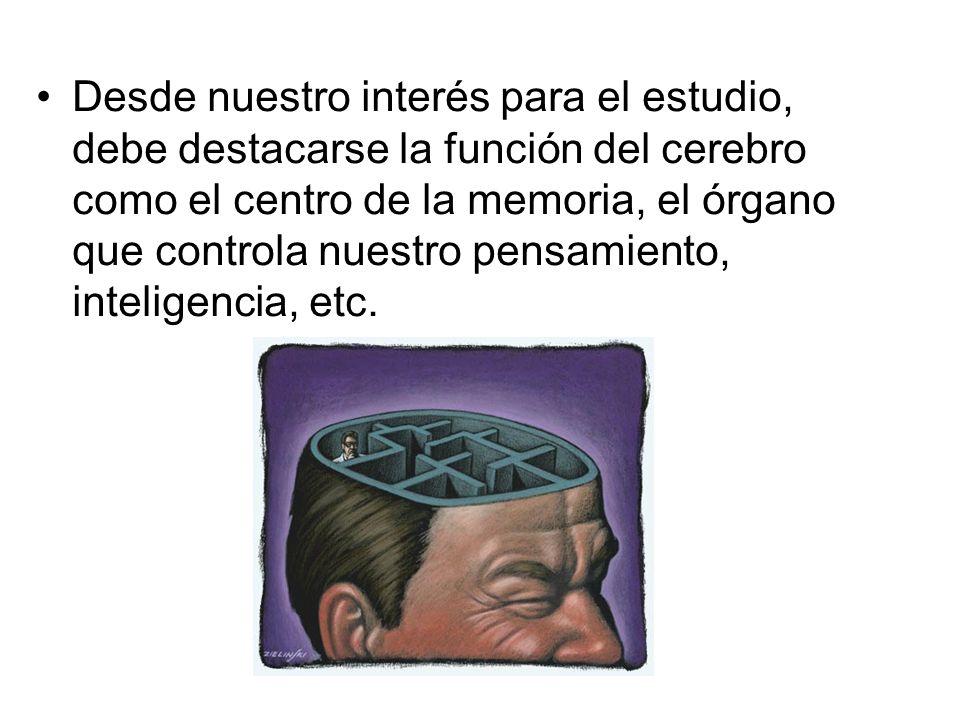 Desde nuestro interés para el estudio, debe destacarse la función del cerebro como el centro de la memoria, el órgano que controla nuestro pensamiento, inteligencia, etc.