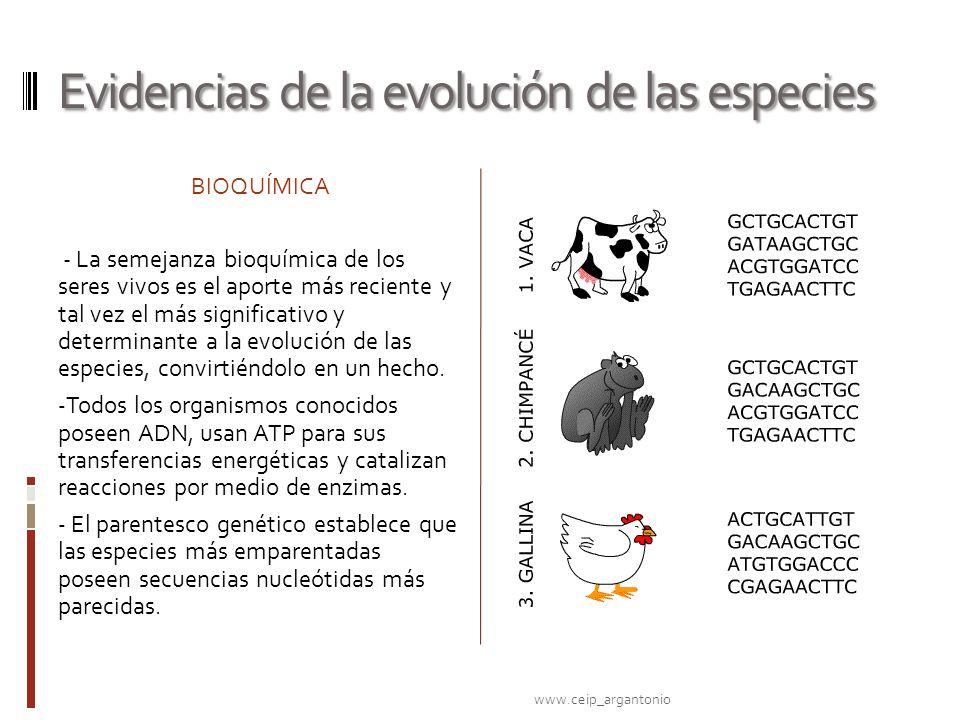 Evidencias de la evolución de las especies
