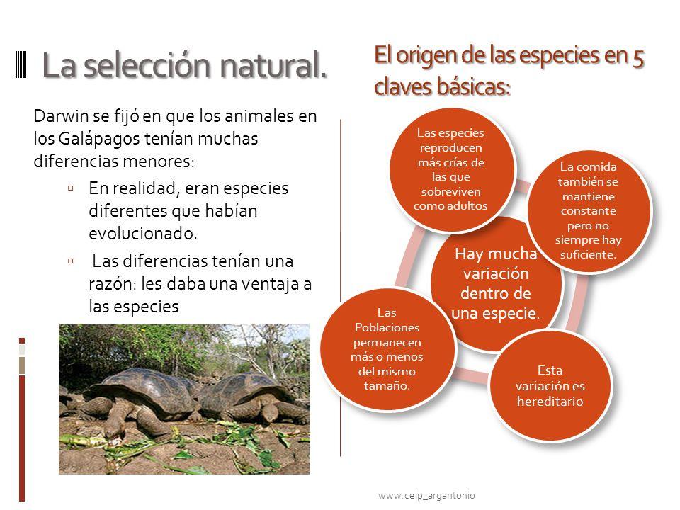 La selección natural. El origen de las especies en 5 claves básicas: