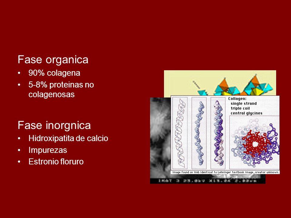 Fase organica Fase inorgnica 90% colagena
