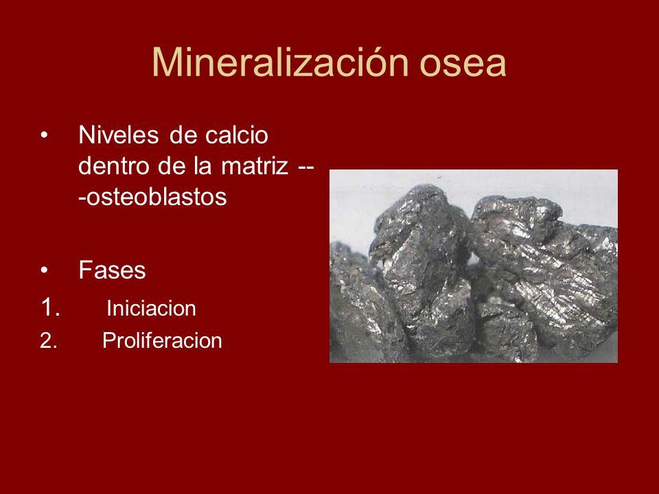 Mineralización osea Niveles de calcio dentro de la matriz ---osteoblastos.