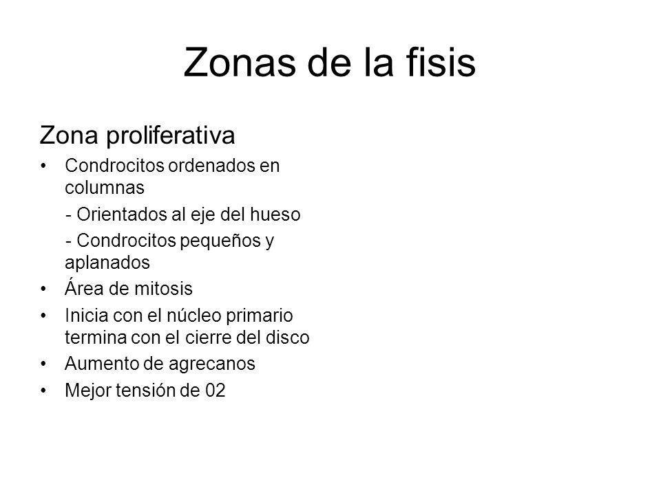 Zonas de la fisis Zona proliferativa Condrocitos ordenados en columnas