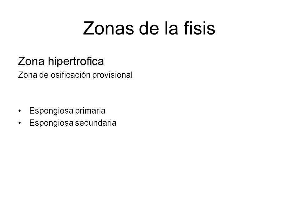 Zonas de la fisis Zona hipertrofica Zona de osificación provisional