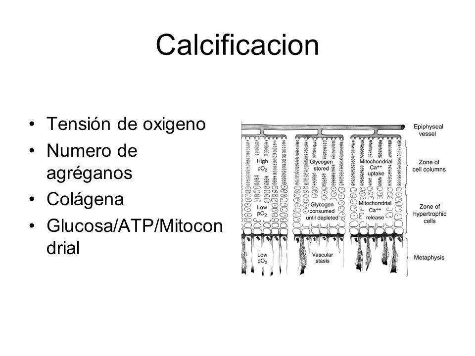 Calcificacion Tensión de oxigeno Numero de agréganos Colágena