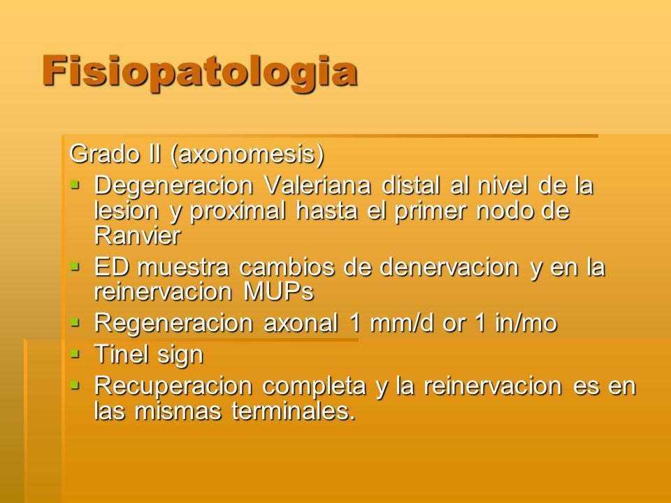 Fisiopatologia Grado II (axonomesis)