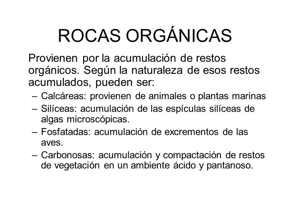 ROCAS ORGÁNICAS Provienen por la acumulación de restos orgánicos. Según la naturaleza de esos restos acumulados, pueden ser:
