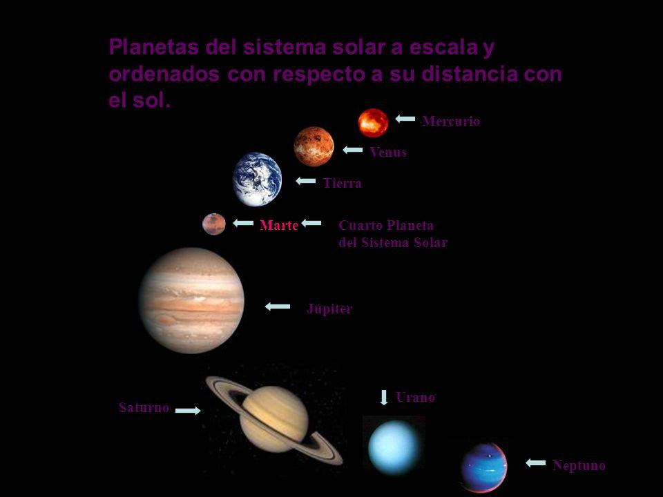 Planetas del sistema solar a escala y ordenados con respecto a su distancia con el sol.
