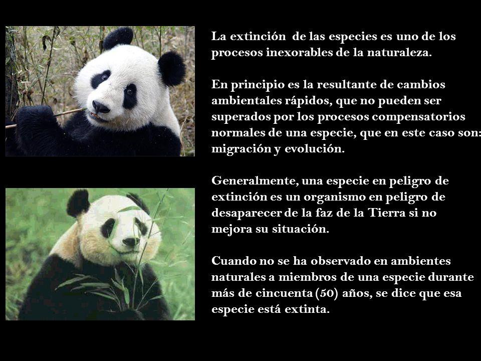 La extinción de las especies es uno de los
