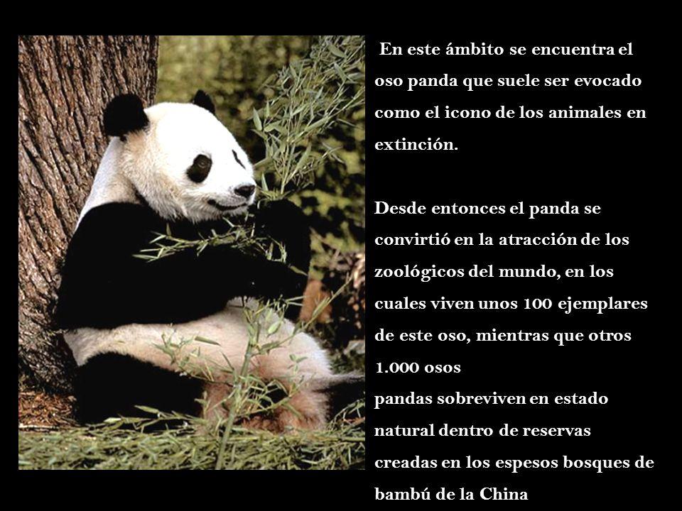 Desde entonces el panda se convirtió en la atracción de los